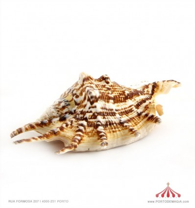 Expositor conchas