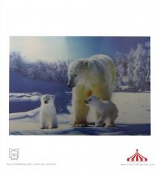 Quadro 3D 3 ursos polares